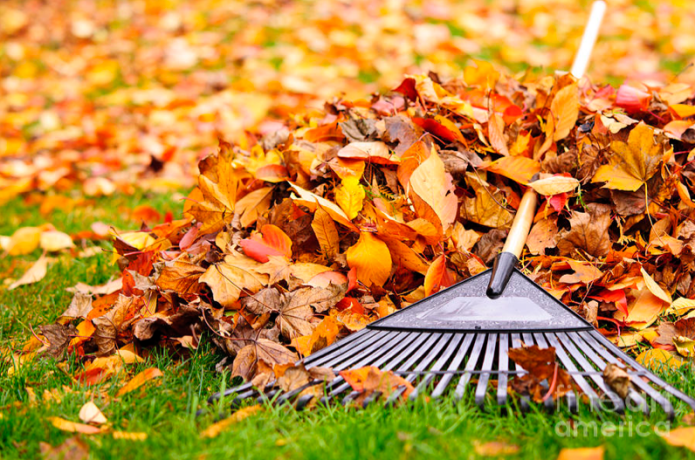 Fall Leaves With Rake by Elena Elisseeva
