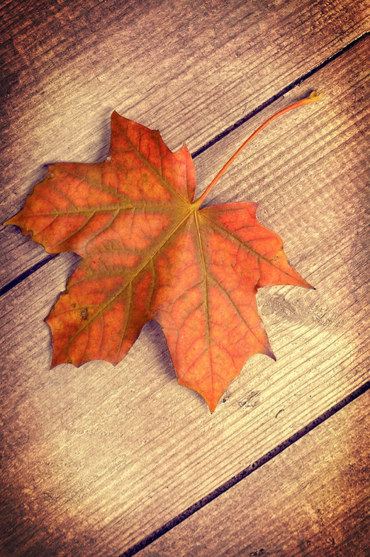 Autumn Leaf by Christopher and Amanda Elwell