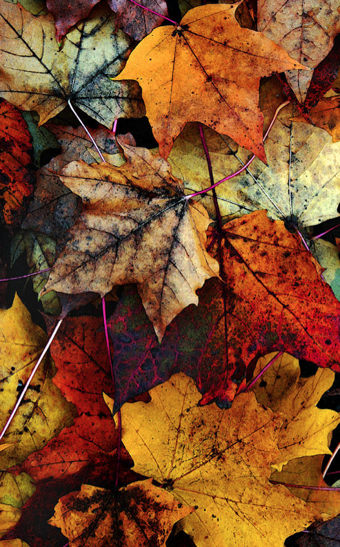 I Love Fall 2 by Joanne Coyle