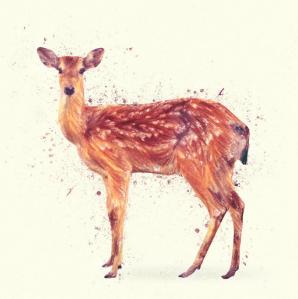 Deer Study by Taylan Soyturk